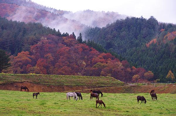 遠野市郊外の紅葉と馬