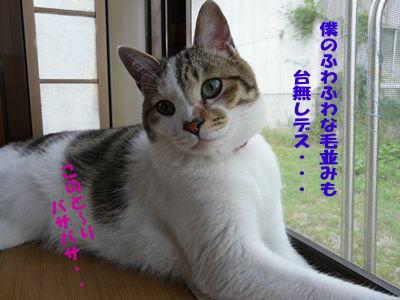 image-cg2.jpg
