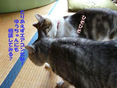 image-cg4.jpg