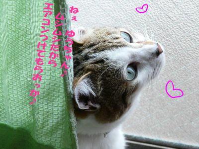 image-cg5.jpg