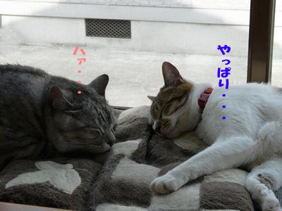 image-cg7.jpg