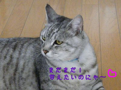 image-hoi.jpg