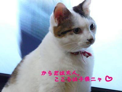 image-yuu.jpg