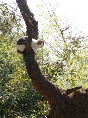 琴弾公園 猫ちゃん 1