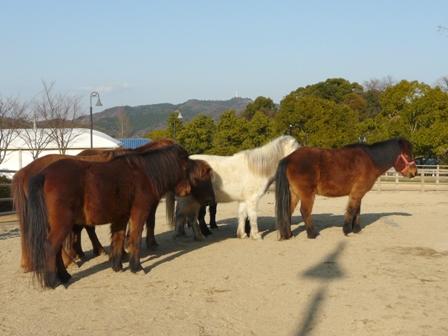 野間馬ハイランド 野間馬 2