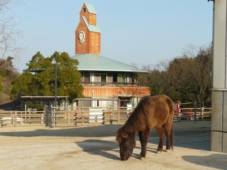 野間馬ハイランド 野間馬 3