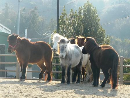 野間馬ハイランド 野間馬 4