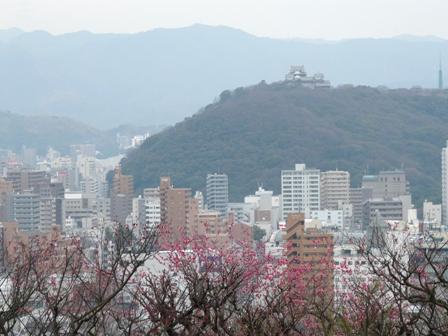 松山総合公園 梅と松山城