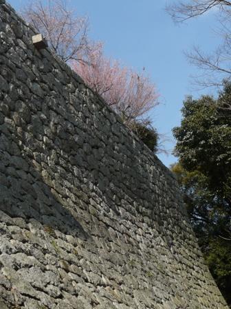 松山城 と 梅 1