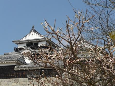松山城 と 梅 3