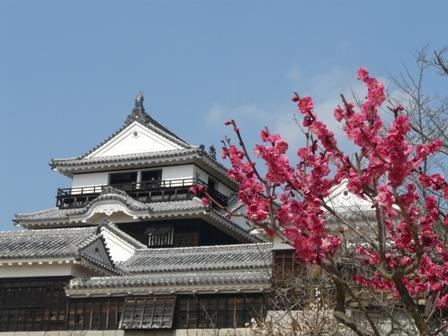 松山城 と 梅 4