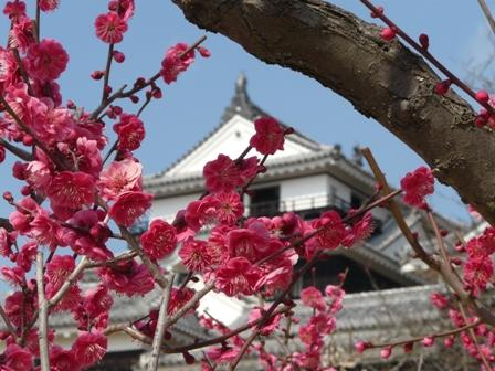 松山城 と 梅 5