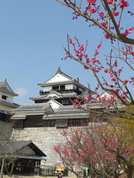 松山城 と 梅 6