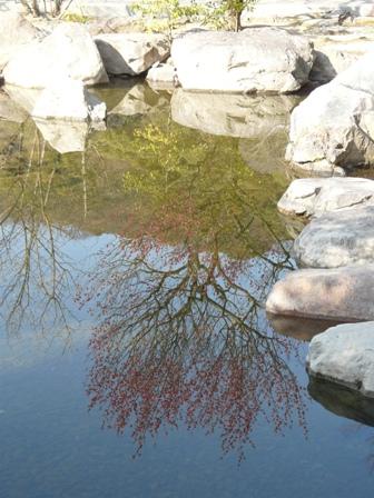 松山城二之丸史跡庭園 池に映る紅梅 2