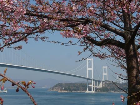 サンライズ糸山 河津桜 2