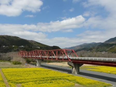 大洲・五郎河原 菜の花 8