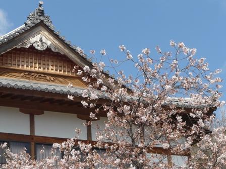 内子・高昌寺 早咲きの桜 1