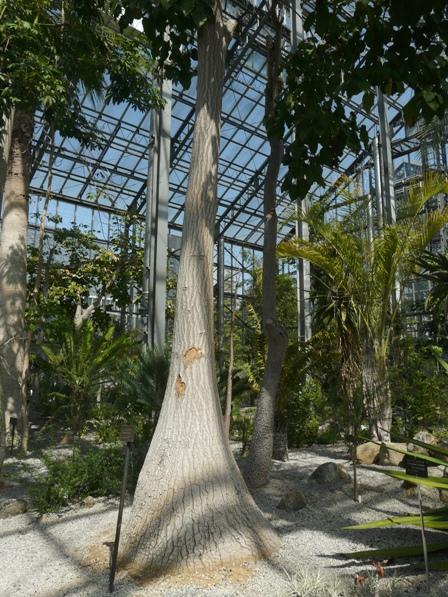 筑波実験植物園 トックリラン