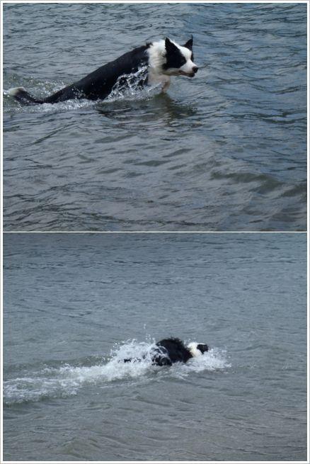 ポールのダイナミックなバタフライにも似た素晴らしい泳ぎ!