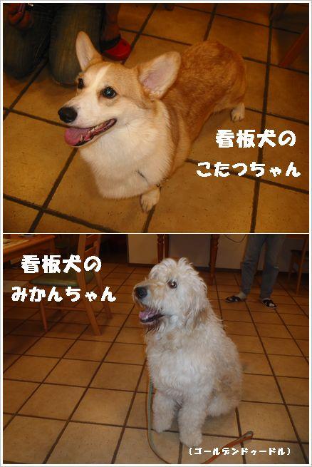 ペンションモンターニャの 看板犬