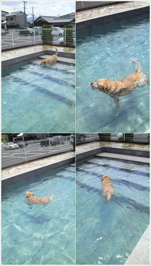 プールへGO!