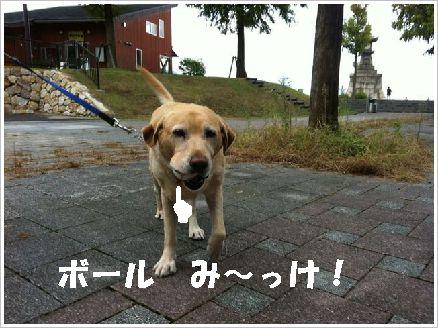 ボール探しの命犬?