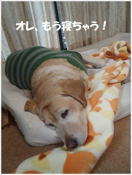 ふて寝かぁ~?