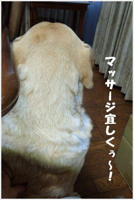 CAI_0019.jpg