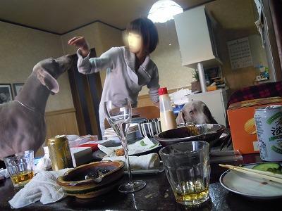 snap_janibasakura_20111123856.jpg