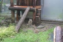 ばんちゃんの旅案内 -日本全国自走の旅--ツシマヤマネコ