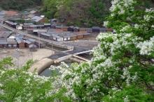 ばんちゃんの旅案内 -日本全国自走の旅--鰐塚のヒトツバダコ