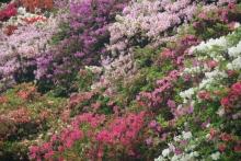 ばんちゃんの旅案内 -日本全国自走の旅--つつじ園