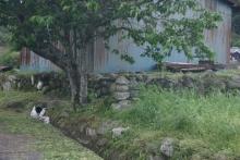 ばんちゃんの旅案内 -日本全国自走の旅--国東半島の石塔