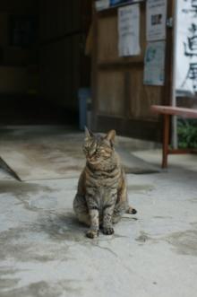 ばんちゃんの旅案内 -日本全国自走の旅--たかね校長