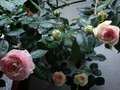 SANY5429_20100512161545.jpg