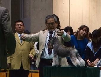 03 ブリード テーブル審査 580-326 2013.04.07