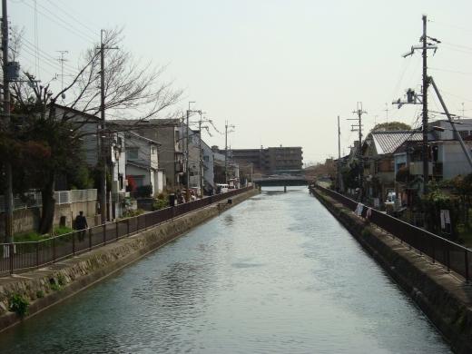 稲荷山桜 075