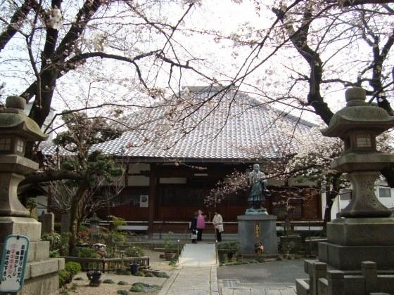 稲荷山桜 065