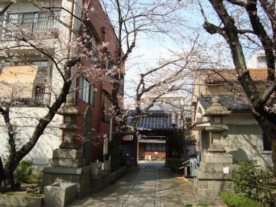 稲荷山桜 054