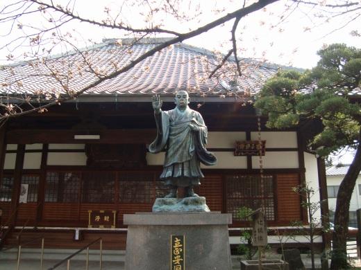 稲荷山桜 052