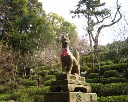 稲荷山桜 093