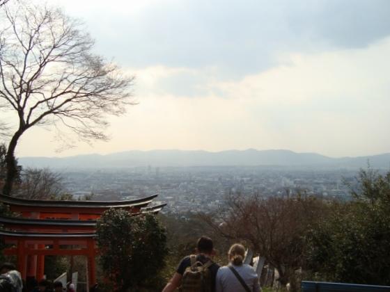 稲荷山桜 113