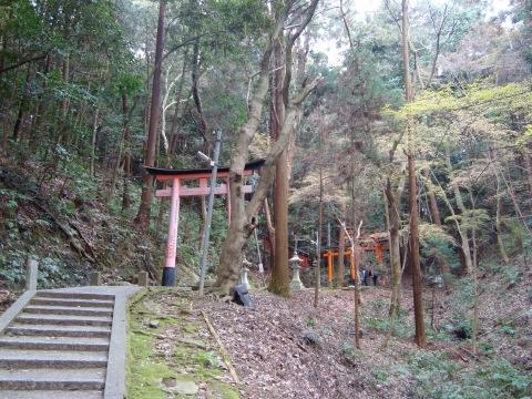 稲荷山桜 126