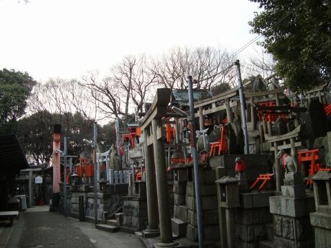 稲荷山桜 118