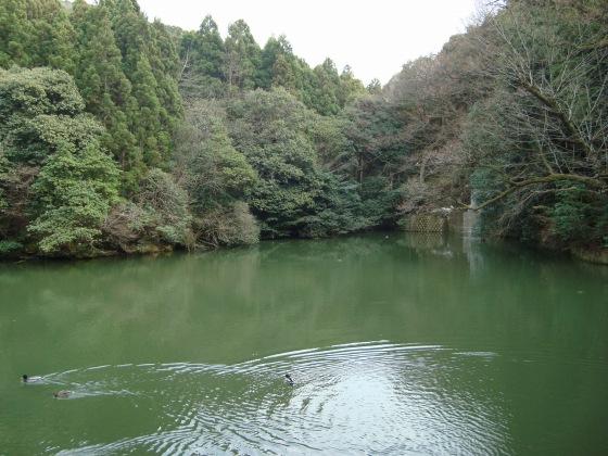 稲荷山桜 103