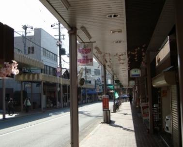 立本寺桜 021