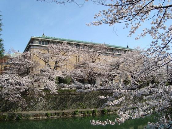岡崎桜2101 048