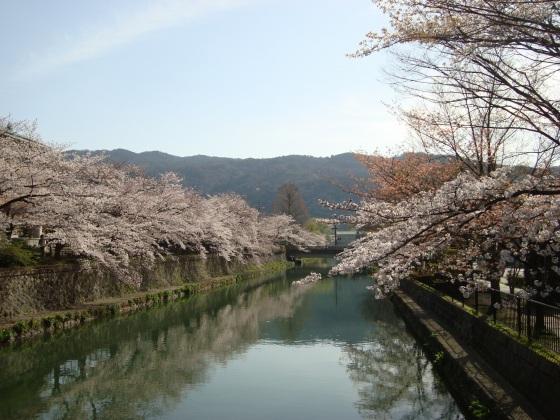 岡崎桜2101 050