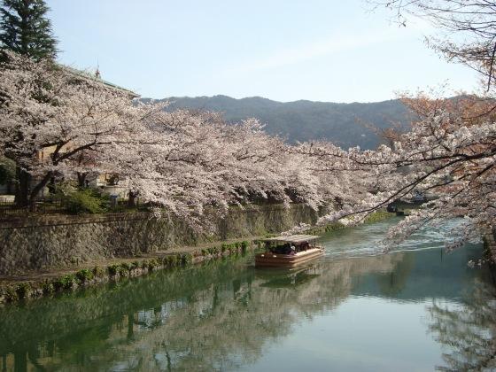 岡崎桜2101 060