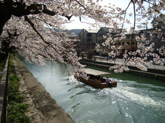 岡崎桜2101 072